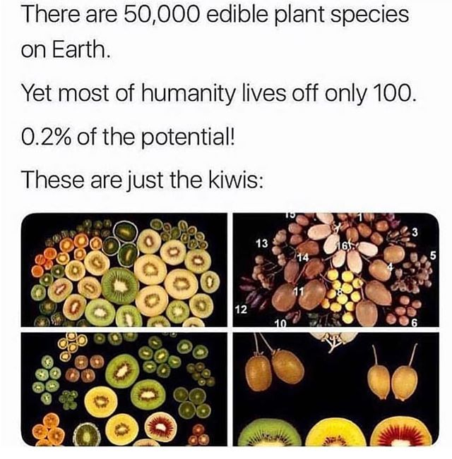 Mother Nature provides everything we need for survival. How gorgeous are these kiwis 🥝😍. What see some of your favorite fruits?! 🍏🍎🍊🍋🍋🍌🍉🍇🍓🍈🍒🍑🥭🍍🥑 • • • #GetYourVibes #fruit #antioxidants #plantfood #plantbased #plantpowered #vegan #vibratehigher #vibefood