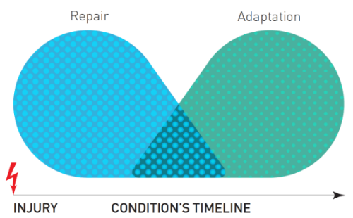 Figure 1: Overlap from repair to adaptation. Adapted from Fig. 3 in Lederman (2015).