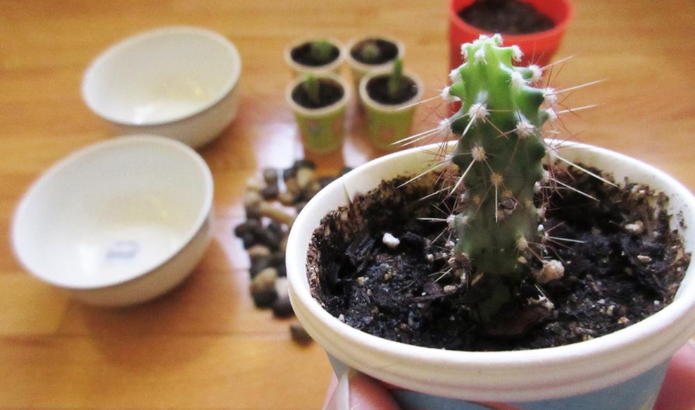 repotting cacti holding cacti.jpg