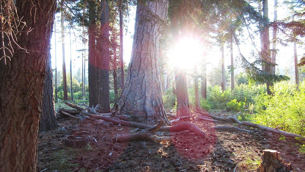 baldwin beach magical tree.jpg
