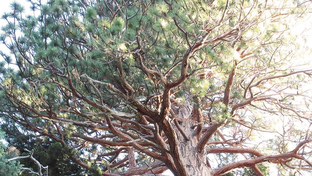 baldwin beach magical tree branches.jpg
