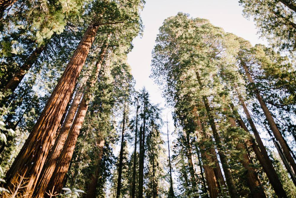 George and Alyssa Sequoias Engagment-1.jpg