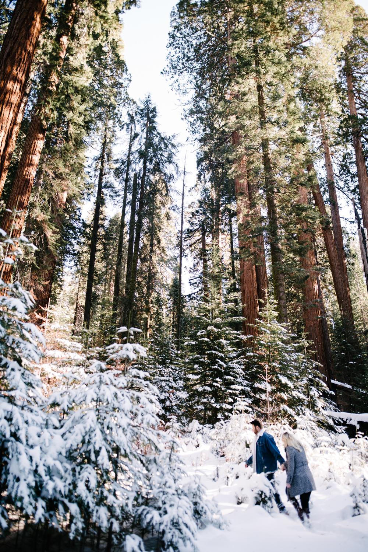 George and Alyssa Sequoias Engagment-4.jpg
