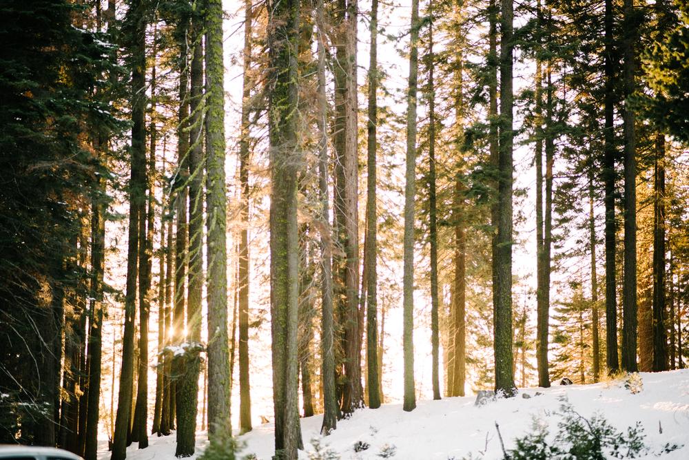 George and Alyssa Sequoias Engagment-15.jpg