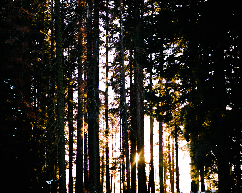 George and Alyssa Sequoias Engagment-45.jpg