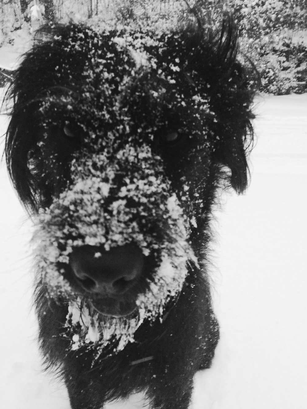 #snowbeard