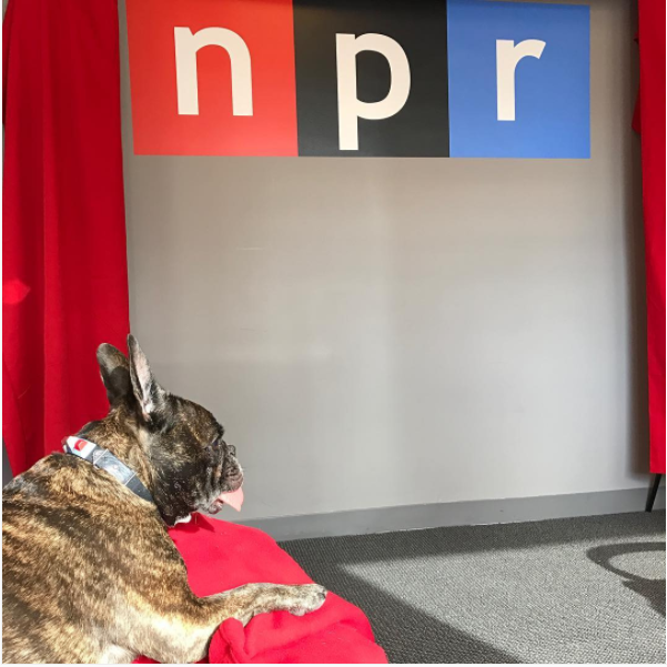 Click the photo to listen to this piece on NPR's website.