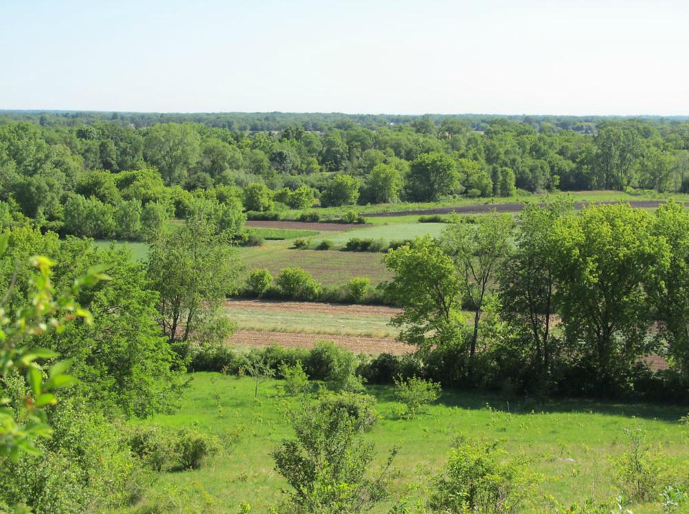 green fields.png