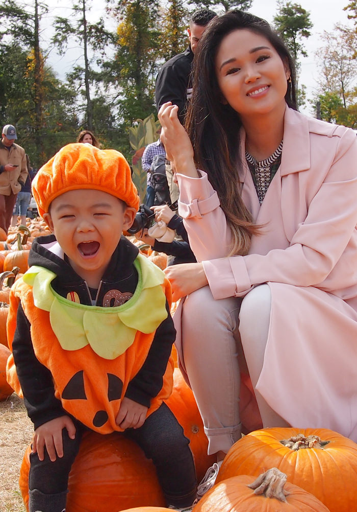 pumpkin patch patricia chang blog