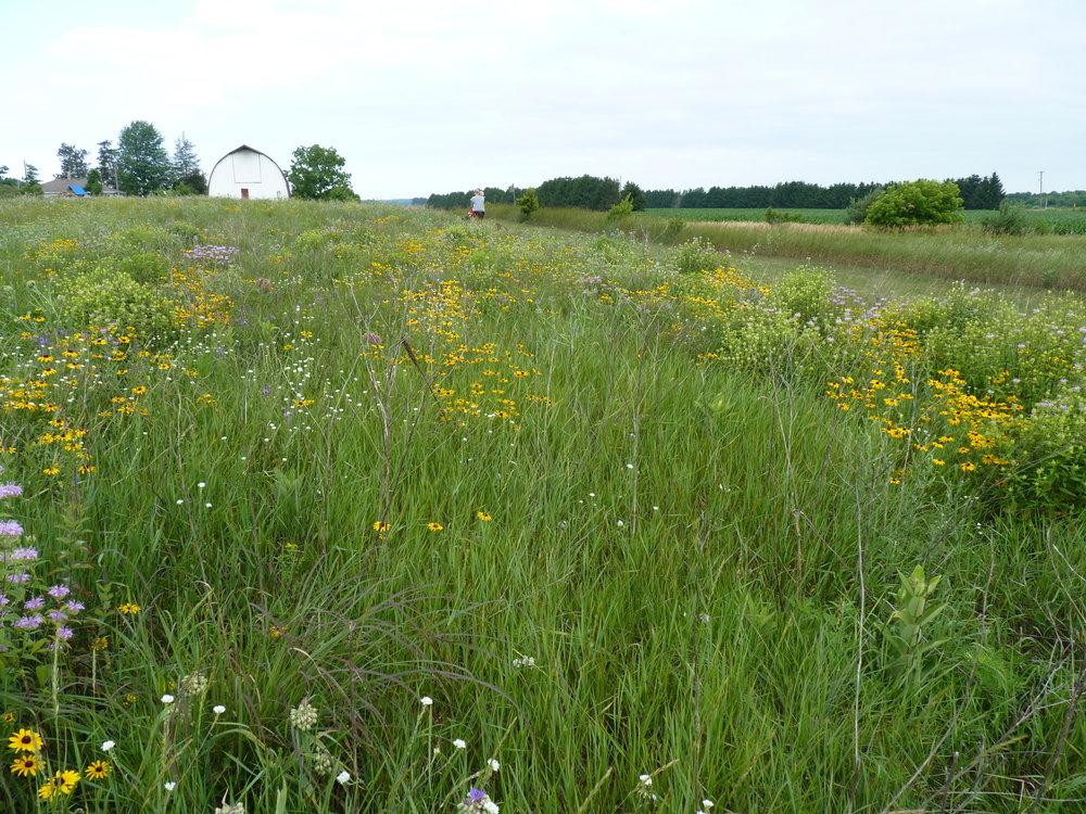 Fennville Prairie Project