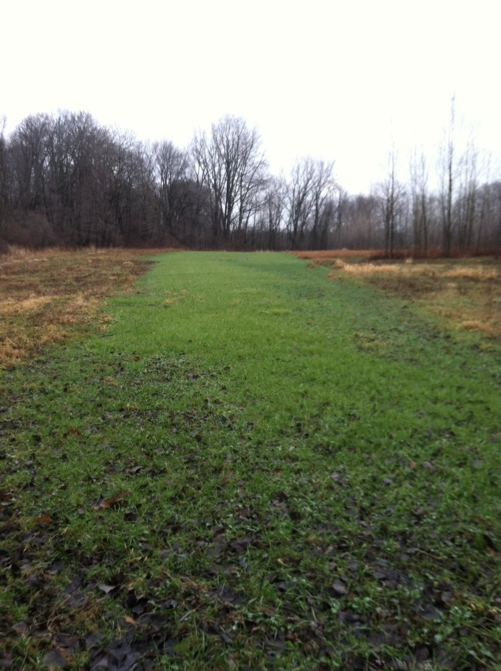 Fennville Food Plot