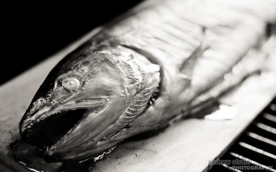 20100831_salmon_2395.jpg