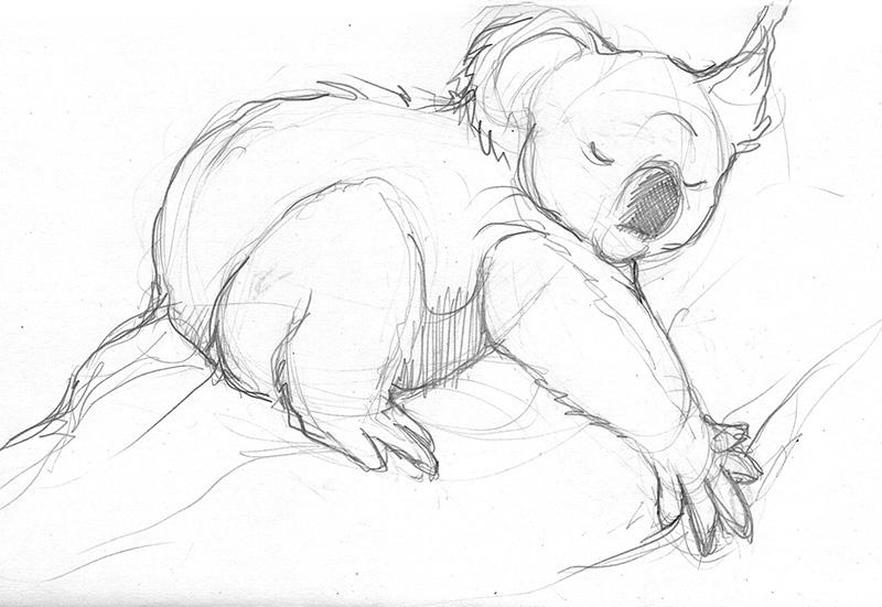 koala_sketch2.jpg