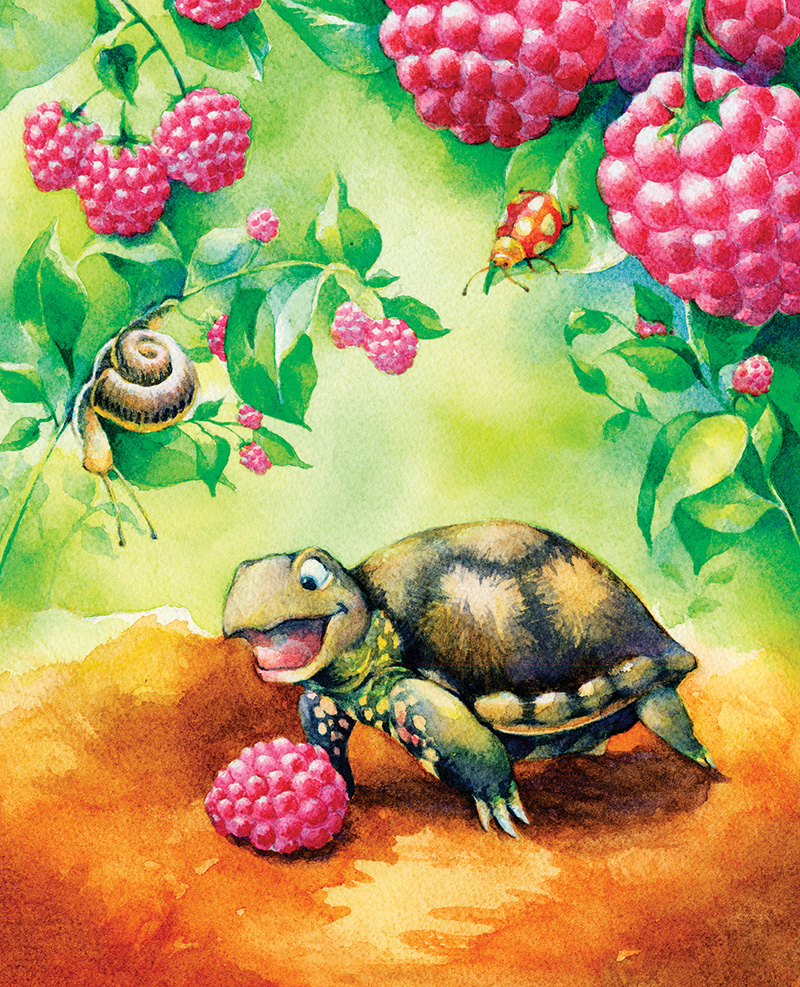 TurtleRaspberry.jpg