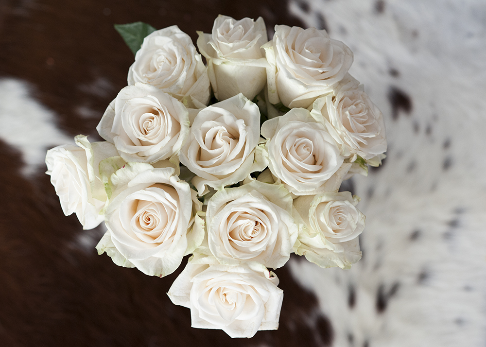 A closeup of the most gorgeous cream and blush roses. I sent my husband on a grocery store run to pick up some ingredients for dinner and he walked in the door with everything I wrote on the list and then these. Romance, guys. It's in the smallest details sometimes.