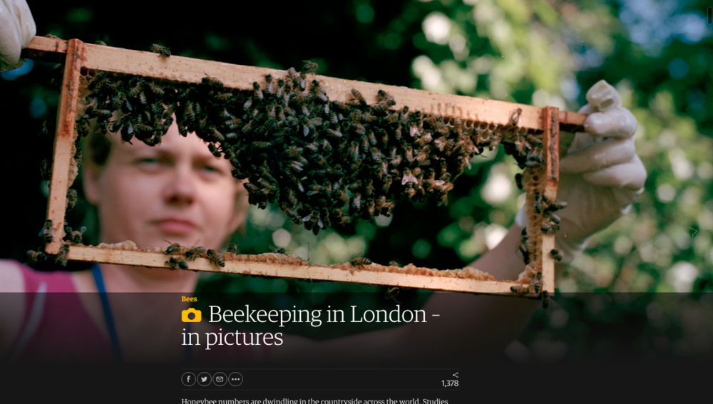 https://www.theguardian.com/environment/gallery/2015/mar/23/beekeeping-in-london-in-pictures