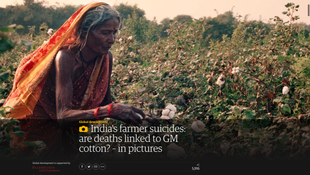 https://www.theguardian.com/global-development/gallery/2014/may/05/india-cotton-suicides-farmer-deaths-gm-seeds