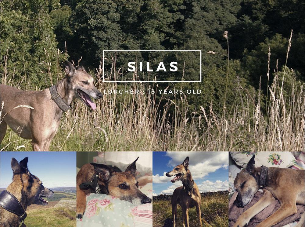 Moorlan Canine Silas