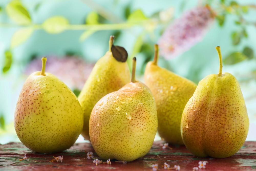 Pears, Summer, 2014