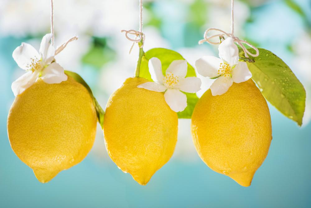 Lemons, Dublin 2014