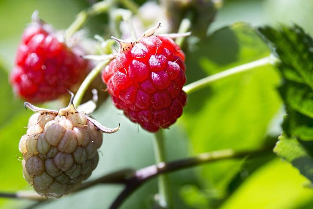First raspberries....