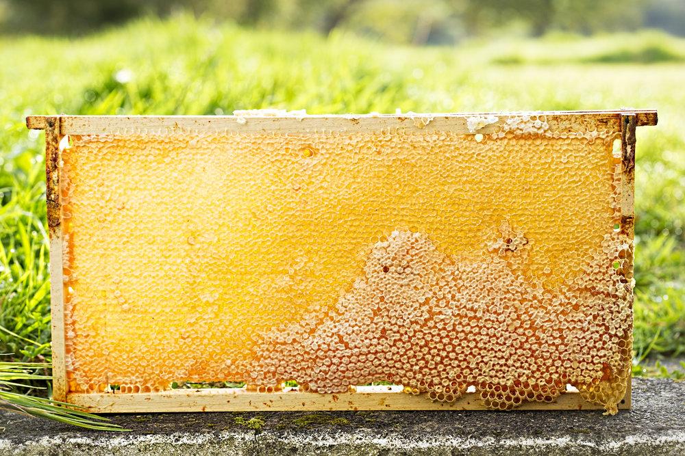 Honey, Olly's Farm, Tallagh Mountains, October 2016