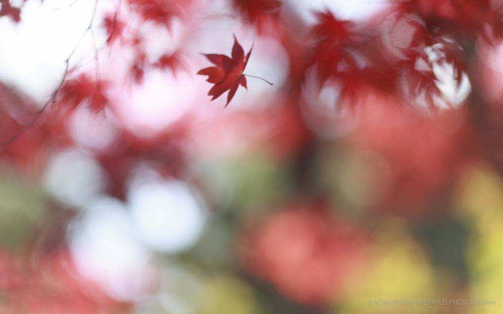 Japan 16-10-17-1.jpg