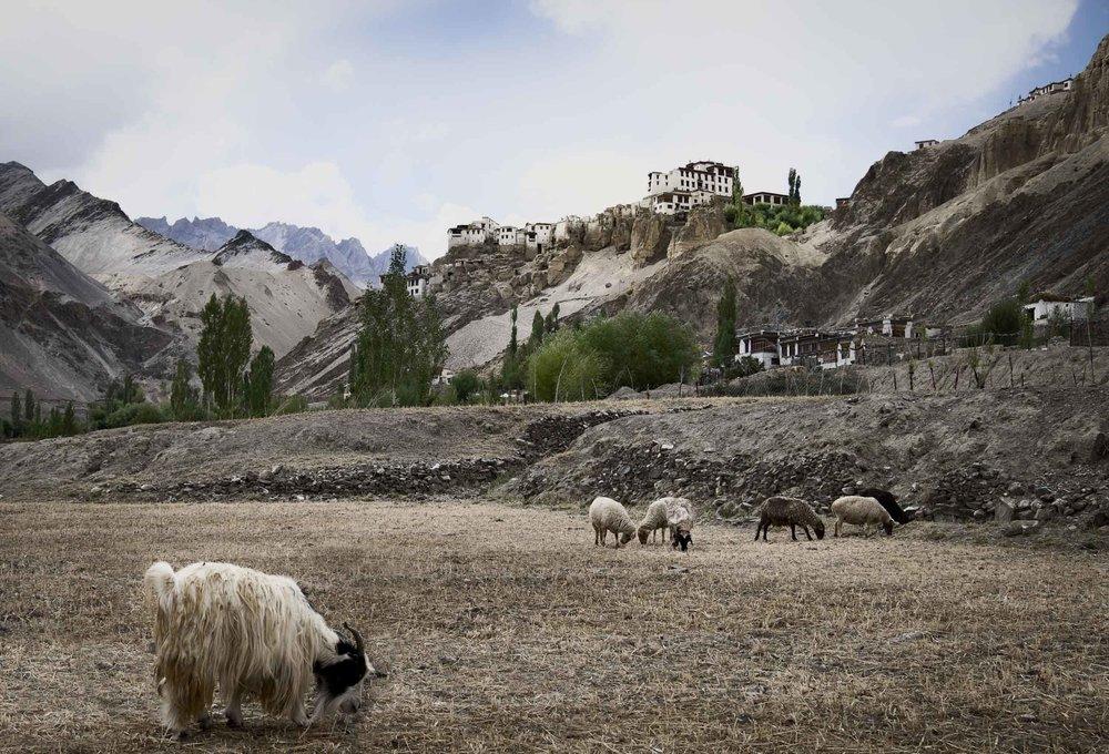 20140911_Ladakh_0672_RvK-Ed-20140911--Ed-20140911-.jpg