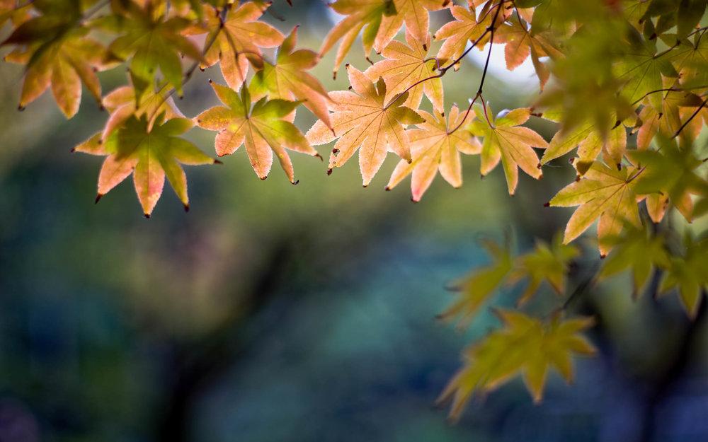 20141104_Japan-Adam_3082_RvK_DxO.jpg