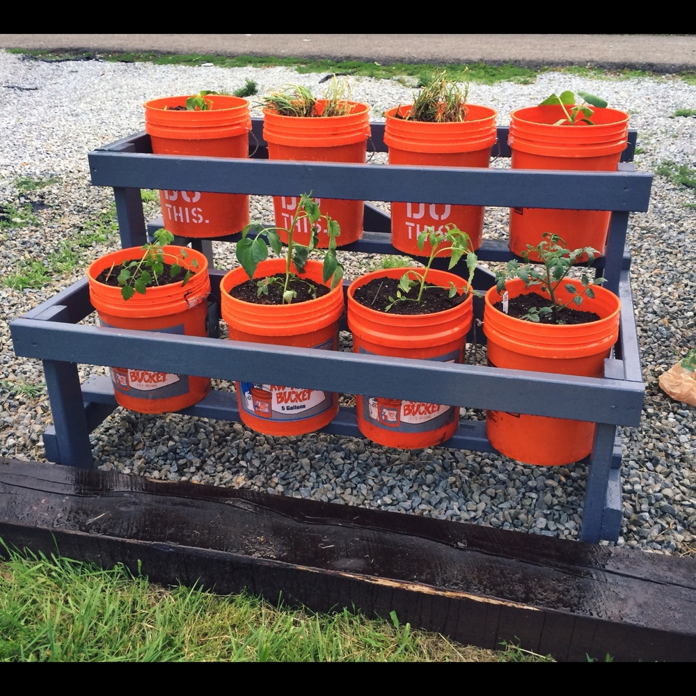 now youre ready to add your buckets and start growing here is a link to a quick and dirty beginners guide to 5 gallon bucket gardening - 5 Gallon Bucket Garden