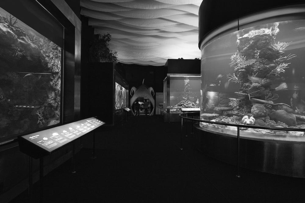 Bueng Boraphet Aquarium
