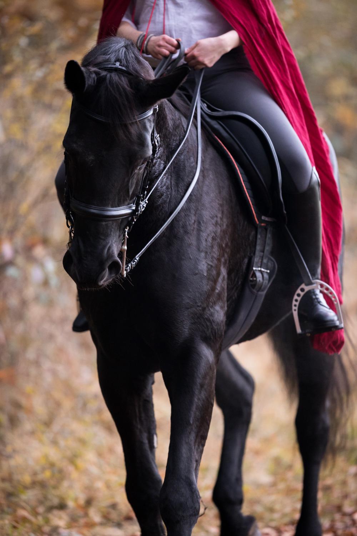 Pferdeshooting_6.jpg