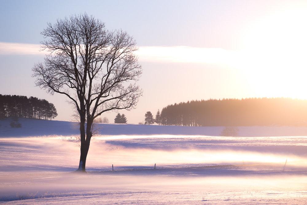 schwarzwald-baum-winter-nebel-sonnenaufgang-daniel-wohlleben.jpg