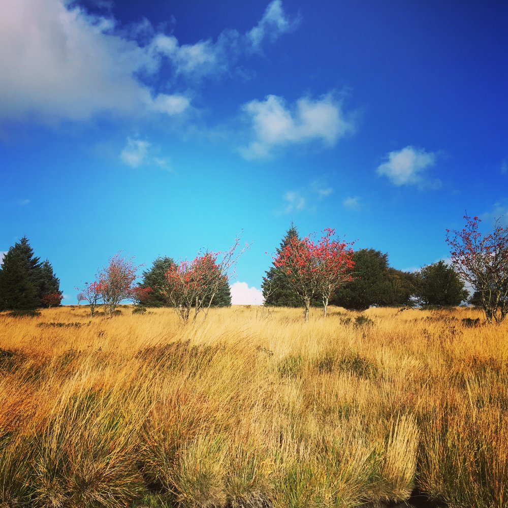 Autumn trees and berries  Fernworthy Reservoir shoreline