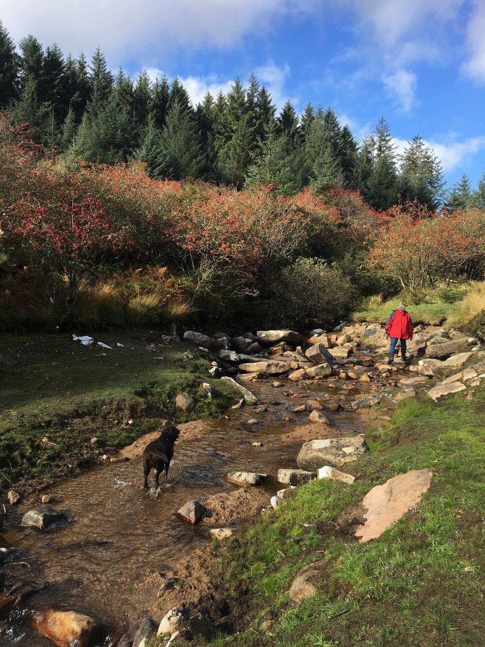 Fernworthy Reservoir stream