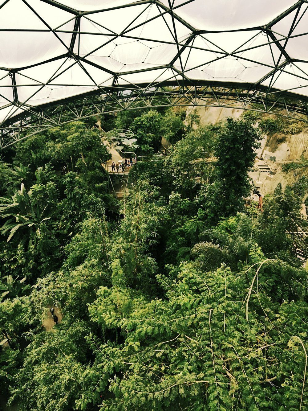 View from the 35m platform down to the 15m platform in the Tropical biome (November 2016)