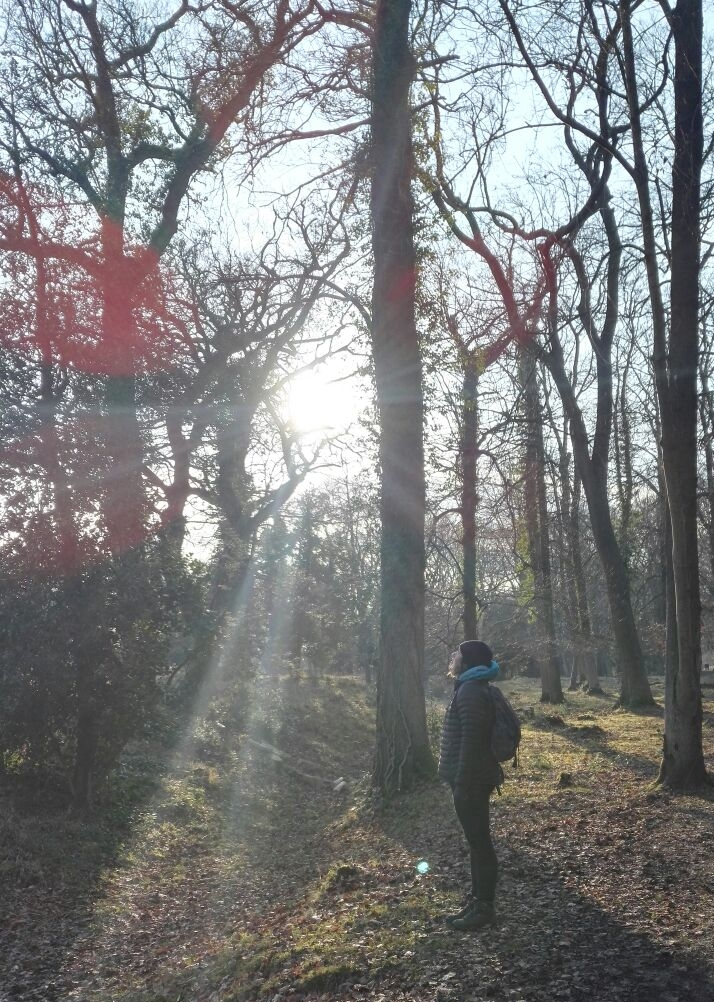 Leigh Woods, Bristol UK January 2017