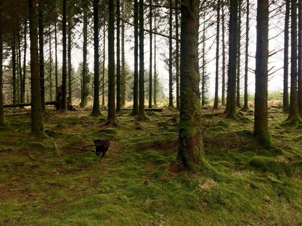 FETCH! Galloping through the woods, Dartmoor - Feb 2017