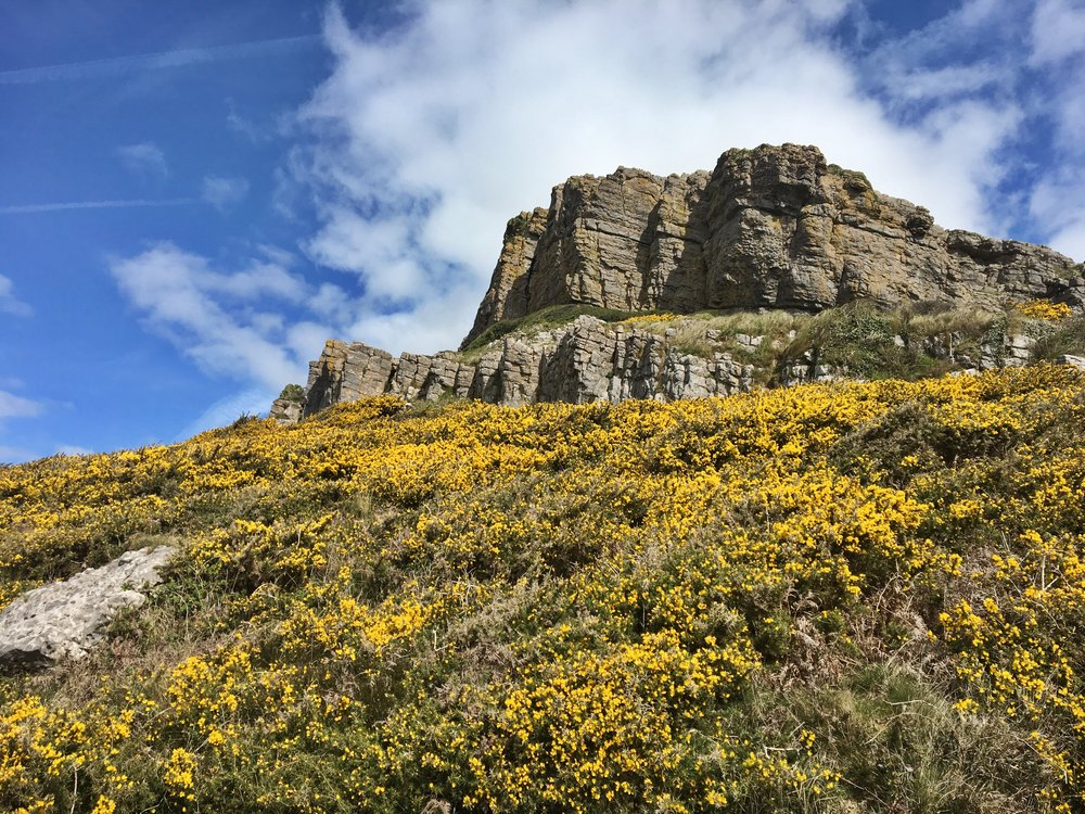 Cliffs and gorse