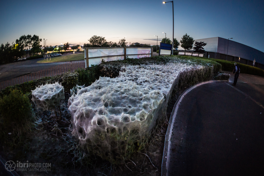 caterpillar nest - 01