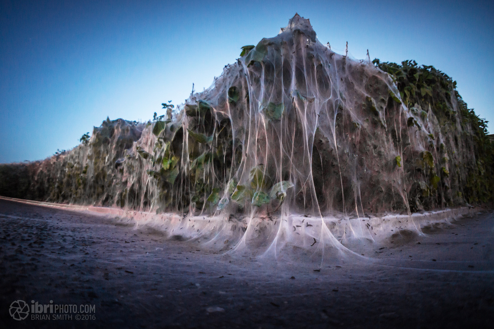 caterpillar nest - 06