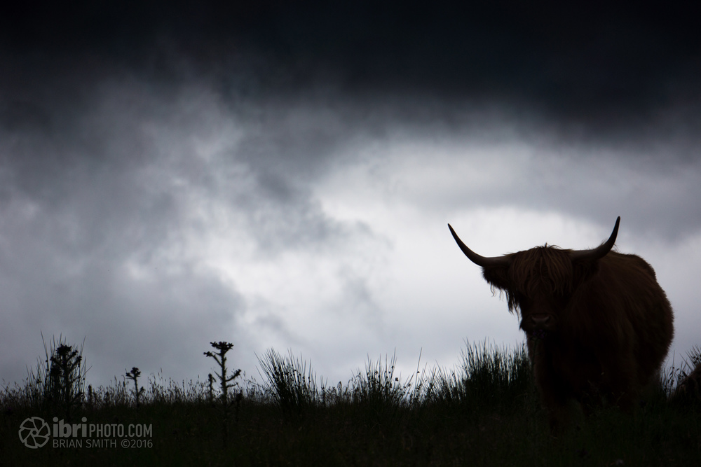 One of the non-military coos we spotted.