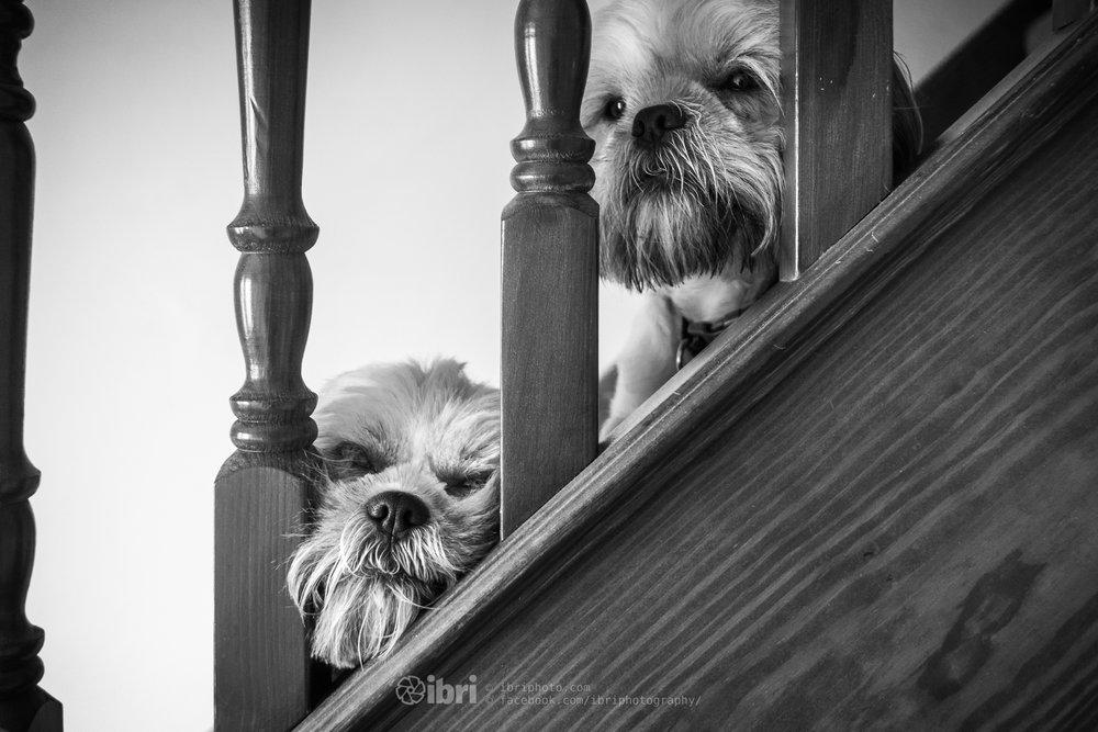 Poppy and Cooper