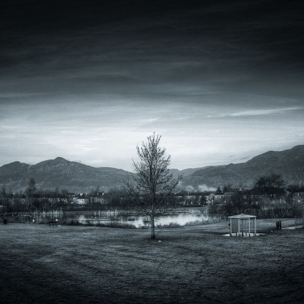 08-Delph Tree 24 Nov 2012.jpg