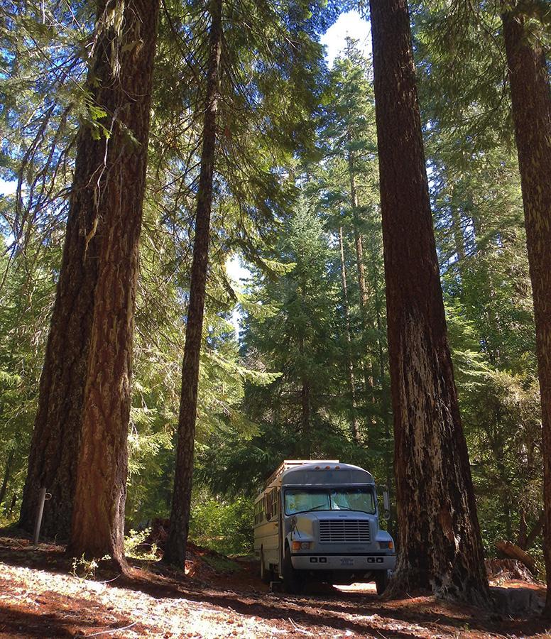 skoolie-love-california-redwooms-camping.jpg
