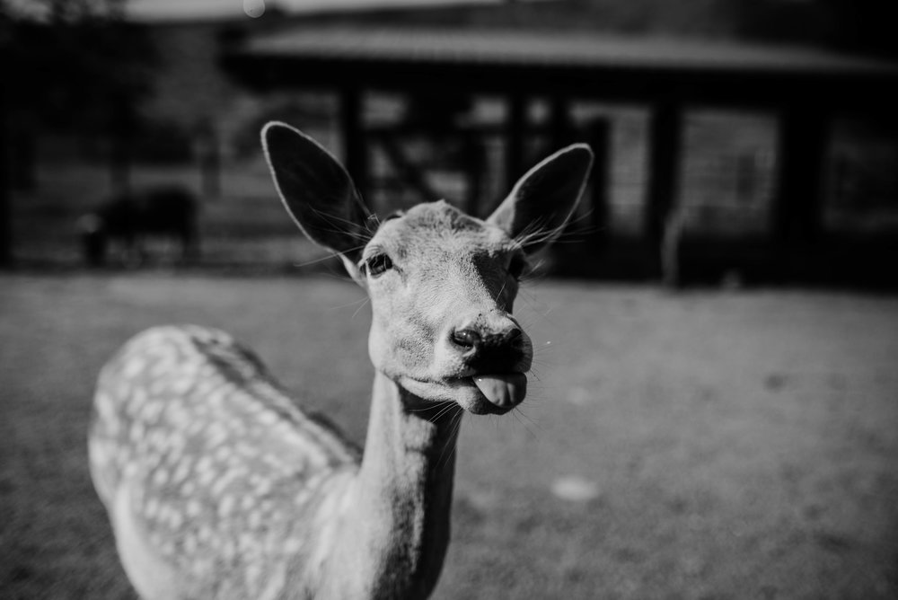 Deer by Jennifer Russell