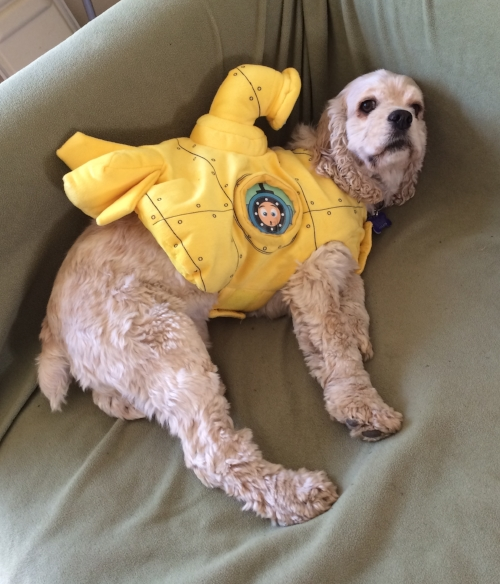 Being a Submarine is pretty tough. Lily may be rethinking her marine biology aspirations.