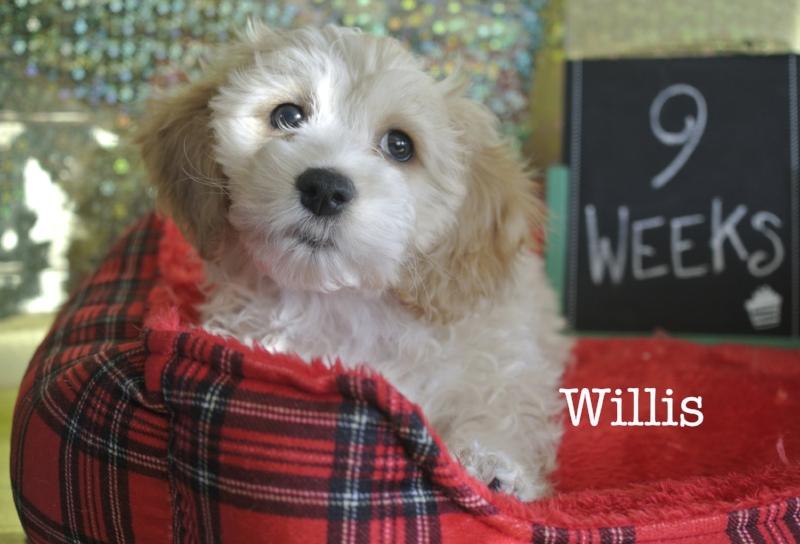 willis9w.jpg