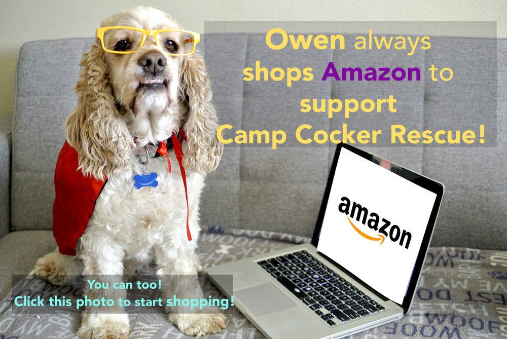 Amazon Cocker Spaniel