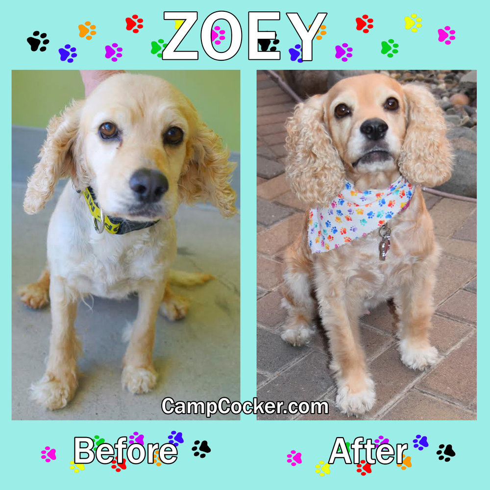 Zoey Before and After.jpg